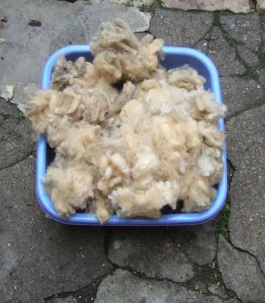 laine conservée