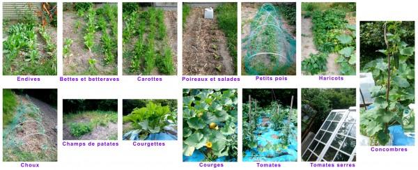 JardinJuillet2009